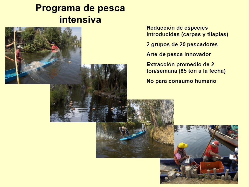 Programa de pesca intensiva