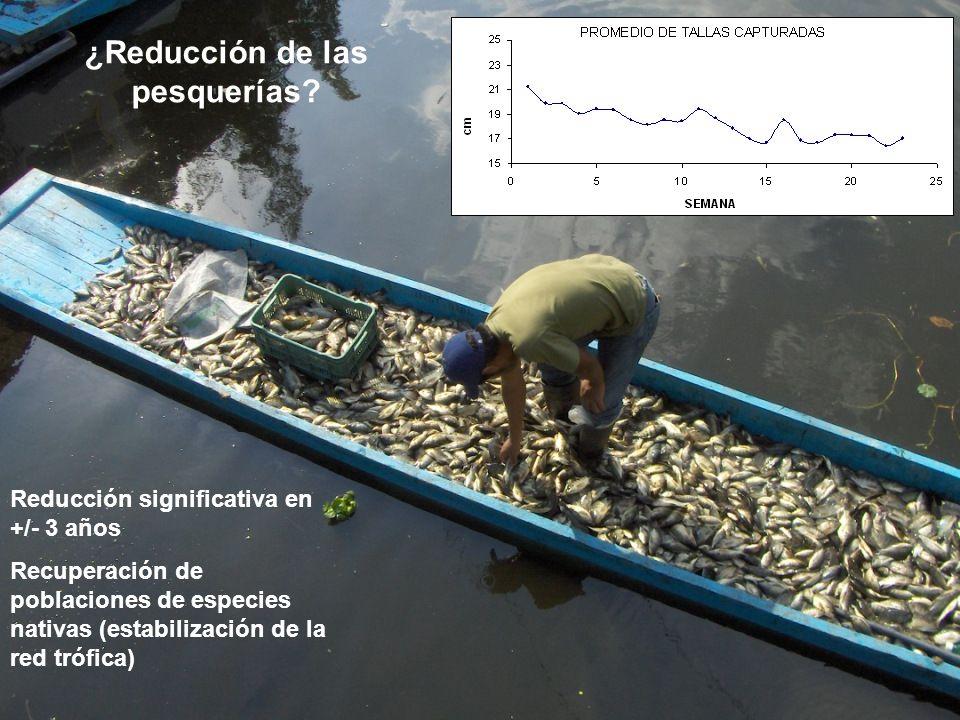¿Reducción de las pesquerías