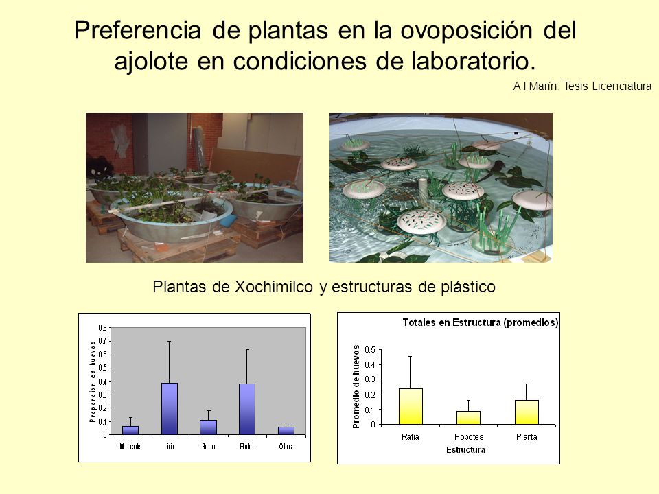 Plantas de Xochimilco y estructuras de plástico