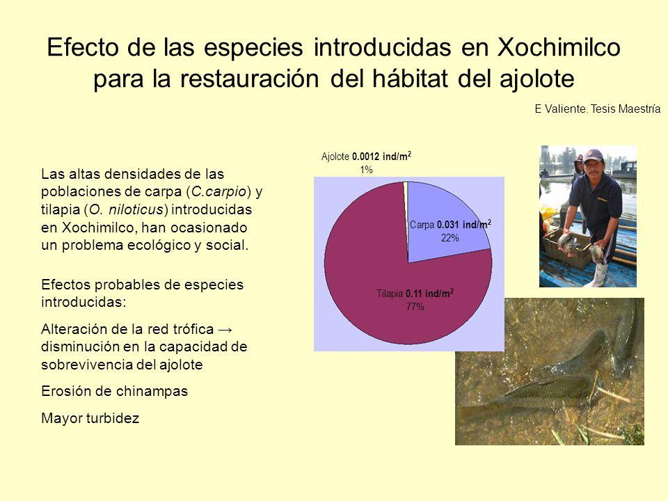 Efecto de las especies introducidas en Xochimilco para la restauración del hábitat del ajolote