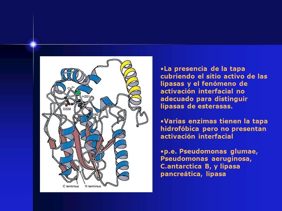 La presencia de la tapa cubriendo el sitio activo de las lipasas y el fenómeno de activación interfacial no adecuado para distinguir lipasas de esterasas.