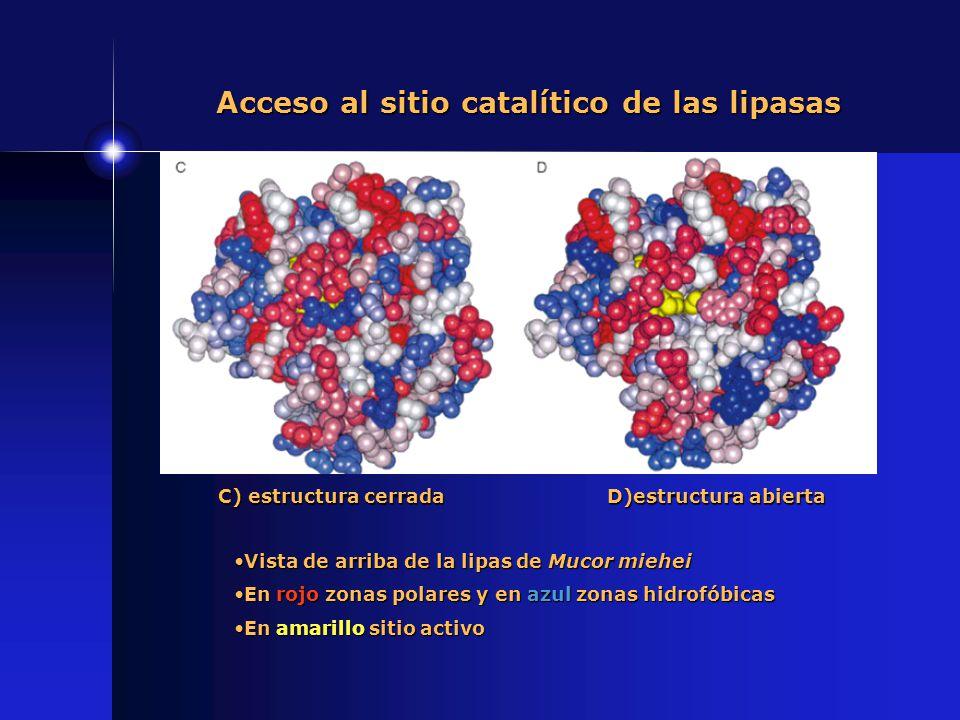 Acceso al sitio catalítico de las lipasas