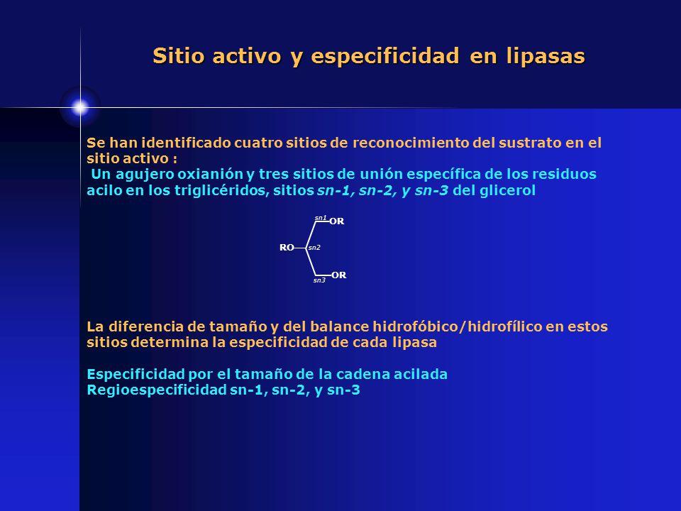 Sitio activo y especificidad en lipasas