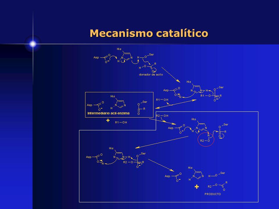 Mecanismo catalítico