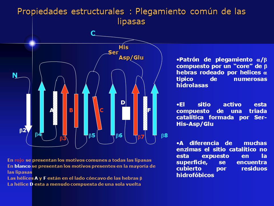 Propiedades estructurales : Plegamiento común de las lipasas