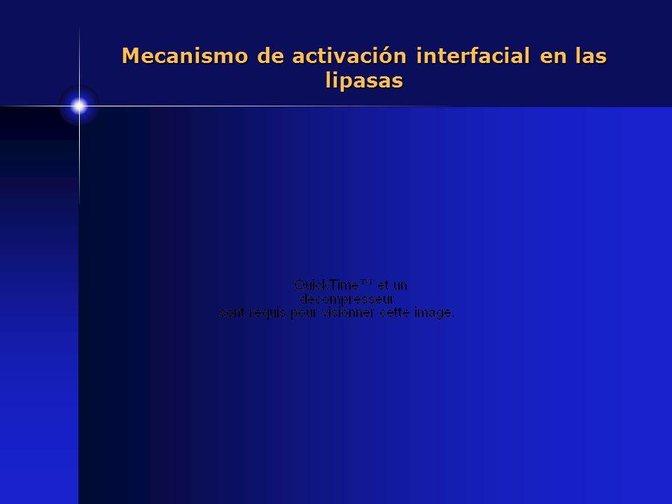 Mecanismo de activación interfacial en las lipasas
