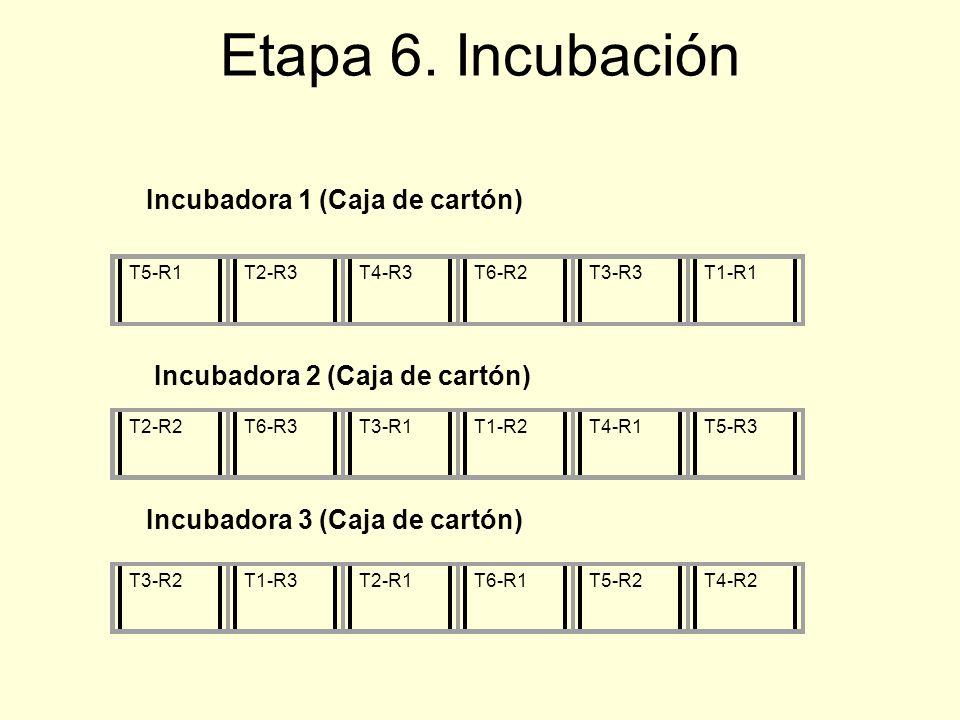 Etapa 6. Incubación Incubadora 1 (Caja de cartón)