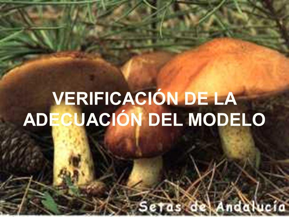 VERIFICACIÓN DE LA ADECUACIÓN DEL MODELO