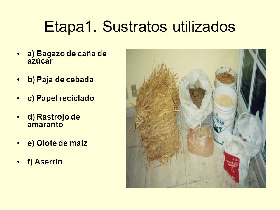 Etapa1. Sustratos utilizados