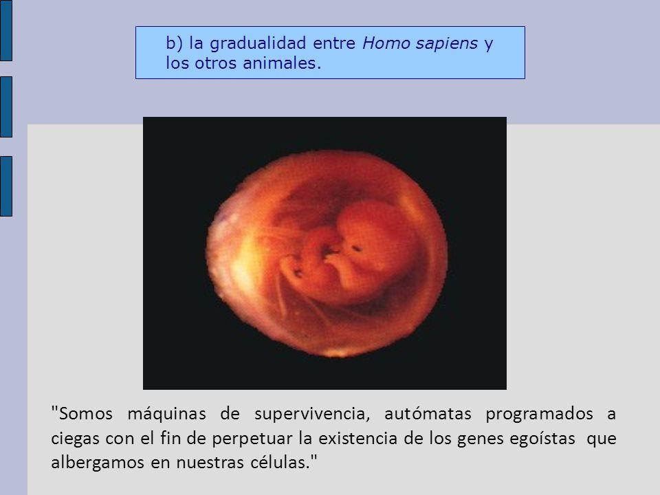 b) la gradualidad entre Homo sapiens y