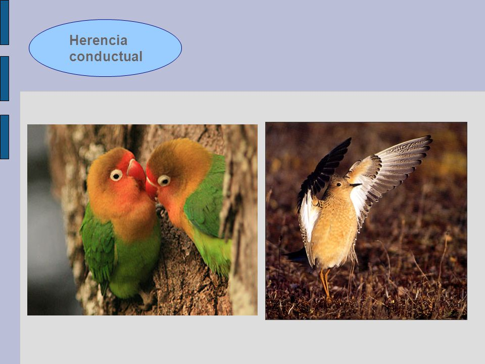 Herencia conductual