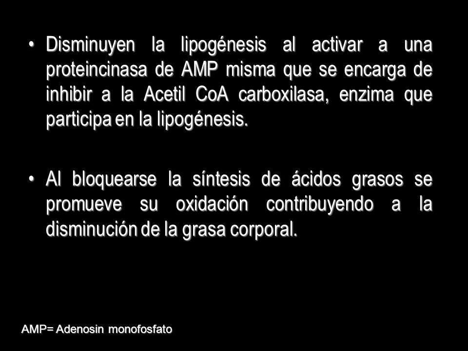 Disminuyen la lipogénesis al activar a una proteincinasa de AMP misma que se encarga de inhibir a la Acetil CoA carboxilasa, enzima que participa en la lipogénesis.