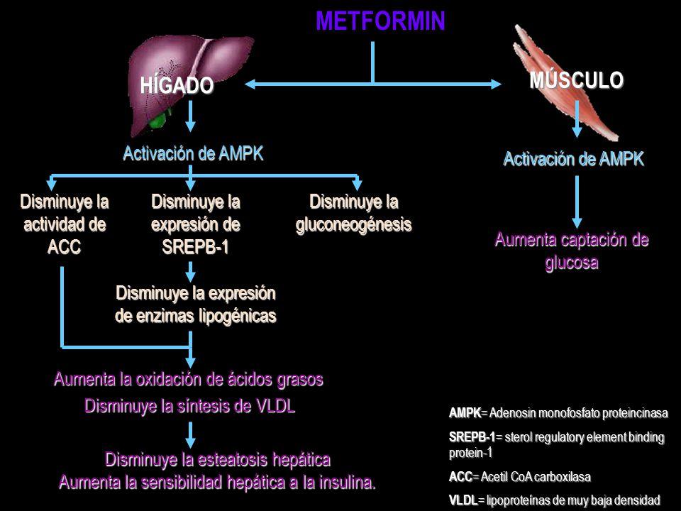METFORMIN MÚSCULO HÍGADO Activación de AMPK Activación de AMPK