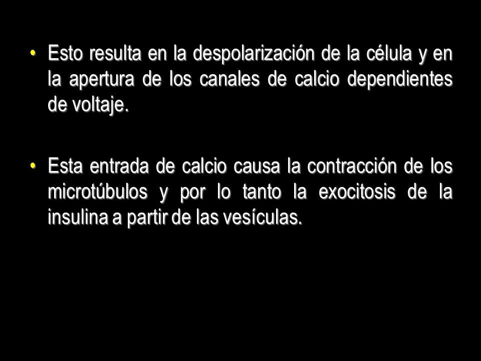 Esto resulta en la despolarización de la célula y en la apertura de los canales de calcio dependientes de voltaje.