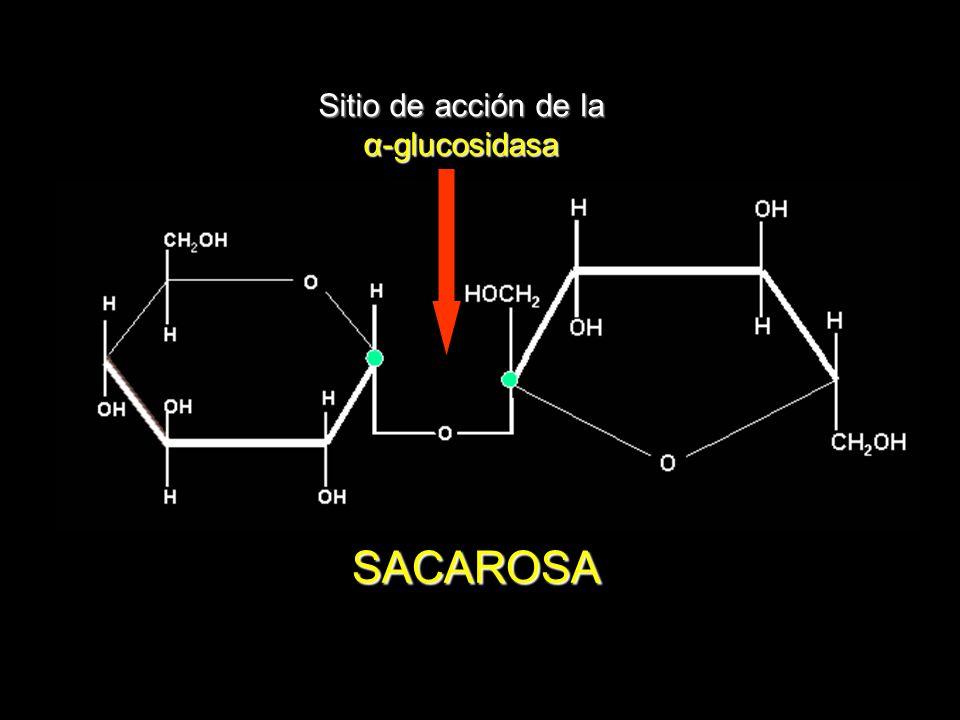 Sitio de acción de la α-glucosidasa