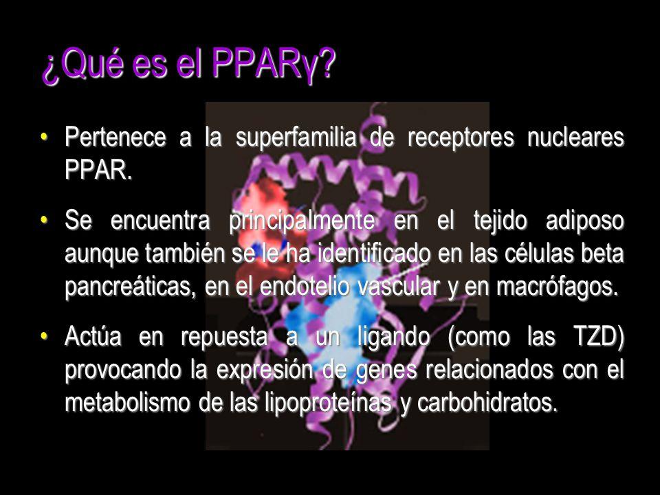 ¿Qué es el PPARγ Pertenece a la superfamilia de receptores nucleares PPAR.