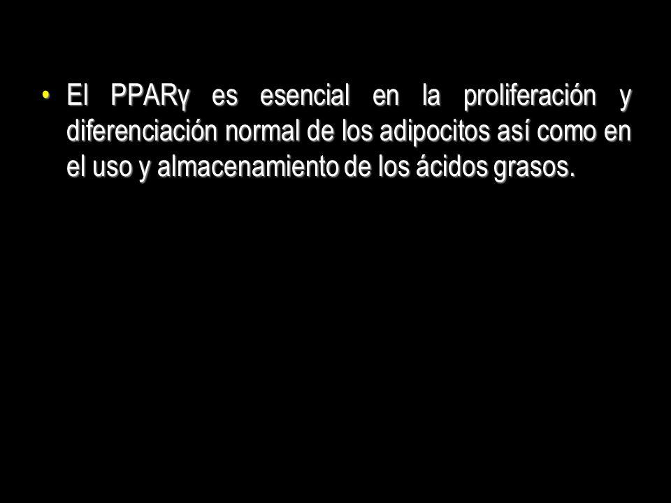 El PPARγ es esencial en la proliferación y diferenciación normal de los adipocitos así como en el uso y almacenamiento de los ácidos grasos.