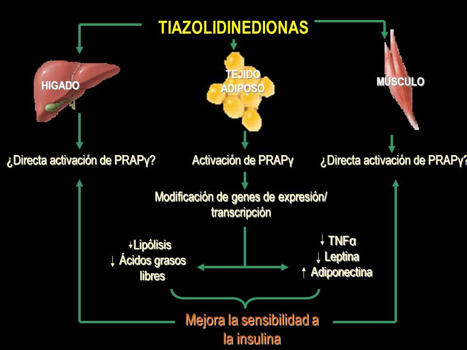 TIAZOLIDINEDIONAS Mejora la sensibilidad a la insulina