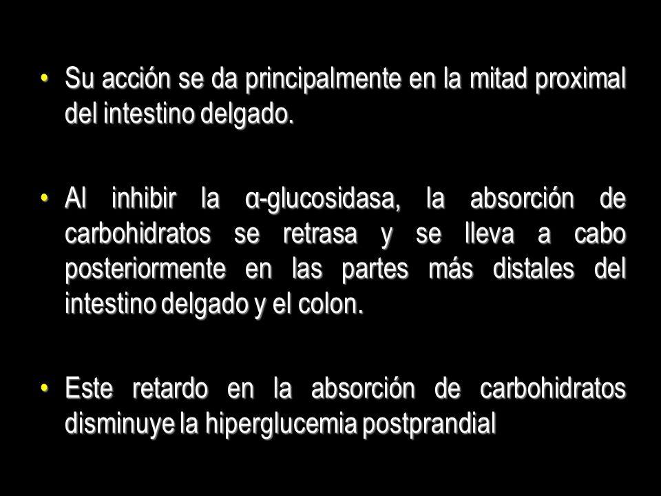 Su acción se da principalmente en la mitad proximal del intestino delgado.