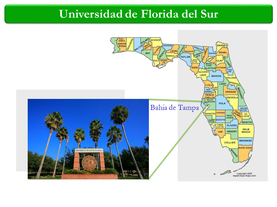 Universidad de Florida del Sur