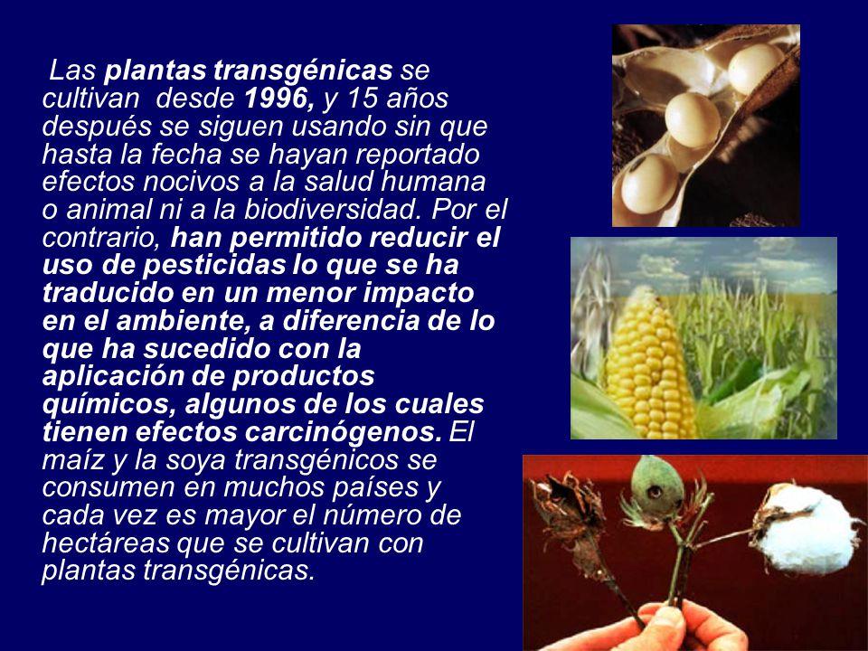 Las plantas transgénicas se cultivan desde 1996, y 15 años después se siguen usando sin que hasta la fecha se hayan reportado efectos nocivos a la salud humana o animal ni a la biodiversidad.