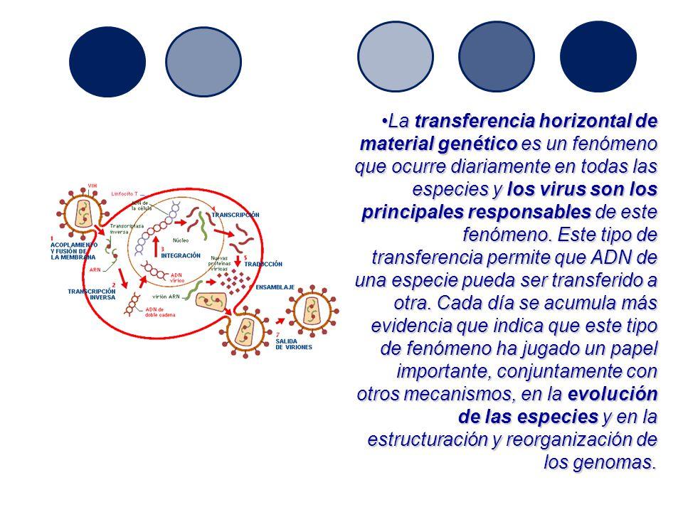 La transferencia horizontal de material genético es un fenómeno que ocurre diariamente en todas las especies y los virus son los principales responsables de este fenómeno.