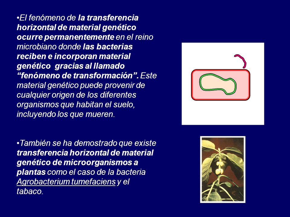 El fenómeno de la transferencia horizontal de material genético ocurre permanentemente en el reino microbiano donde las bacterias reciben e incorporan material genético gracias al llamado fenómeno de transformación . Este material genético puede provenir de cualquier origen de los diferentes organismos que habitan el suelo, incluyendo los que mueren.