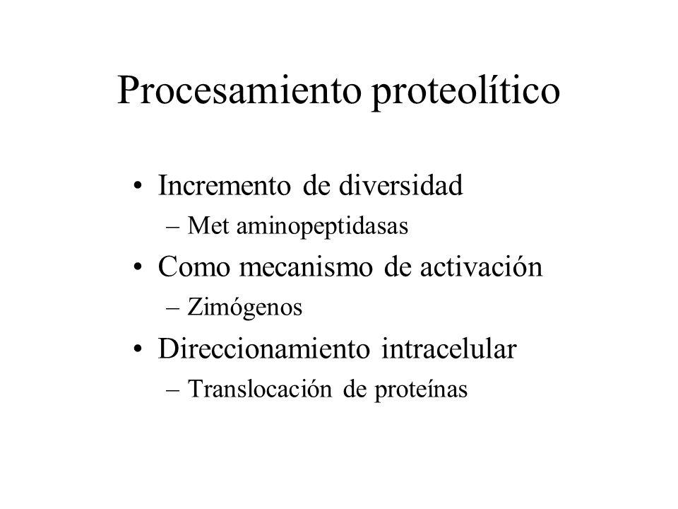 Procesamiento proteolítico