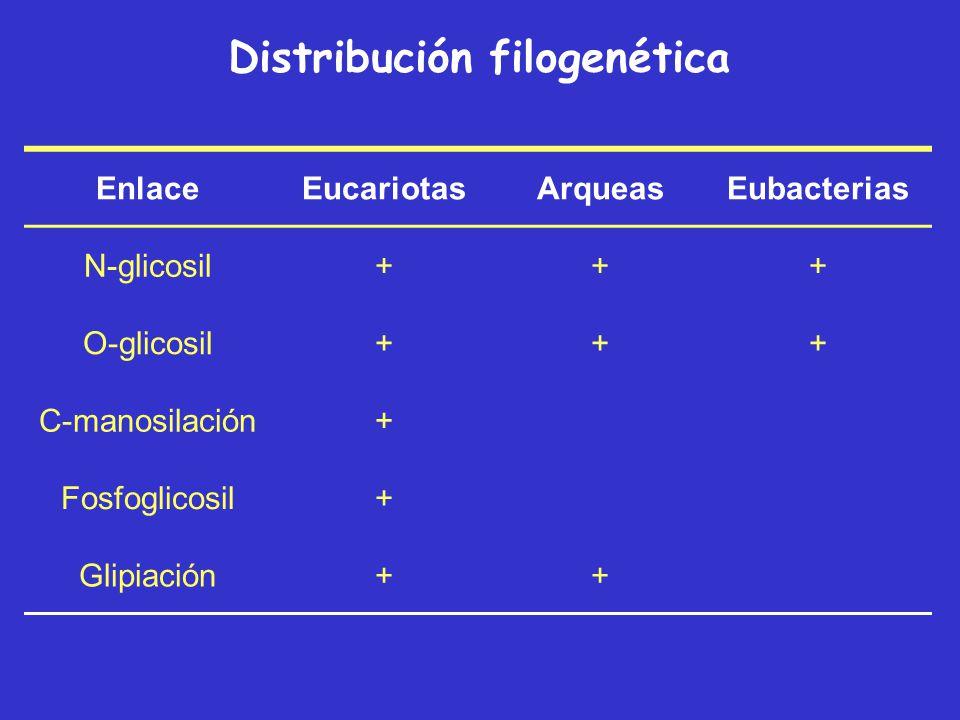 Distribución filogenética