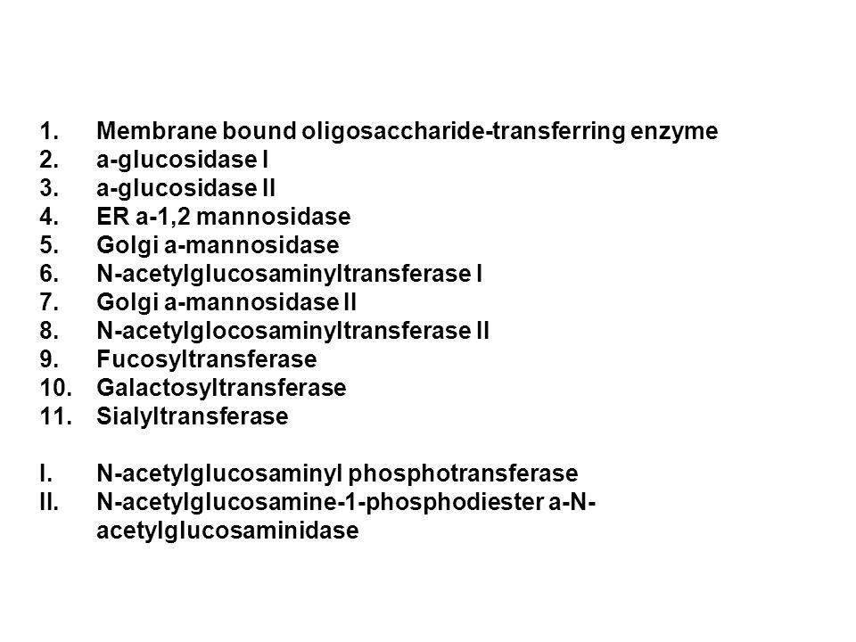Membrane bound oligosaccharide-transferring enzyme