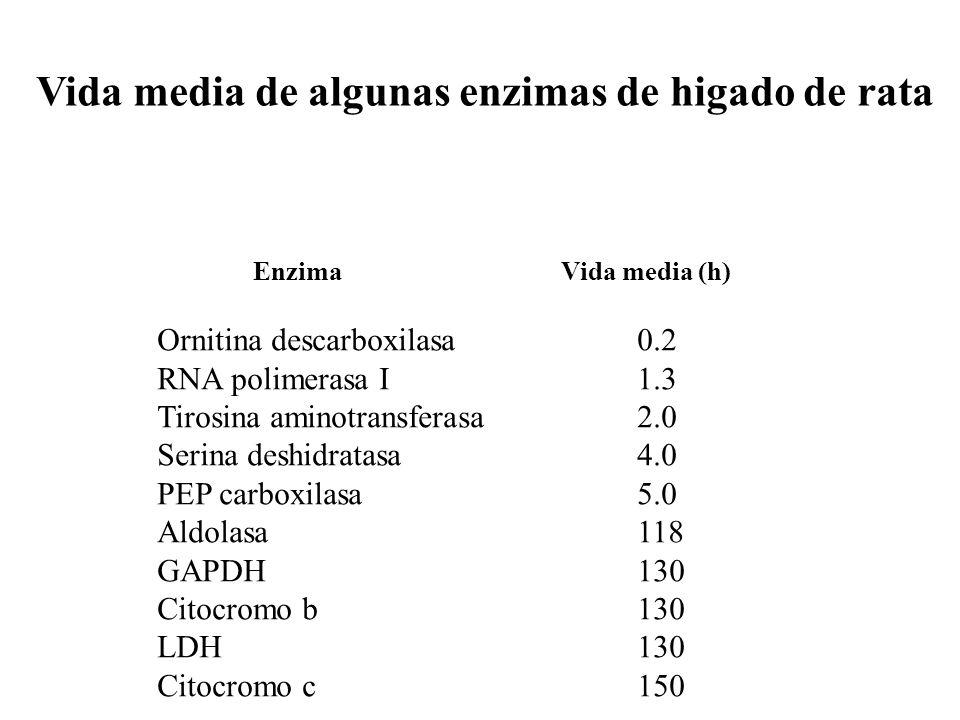 Vida media de algunas enzimas de higado de rata