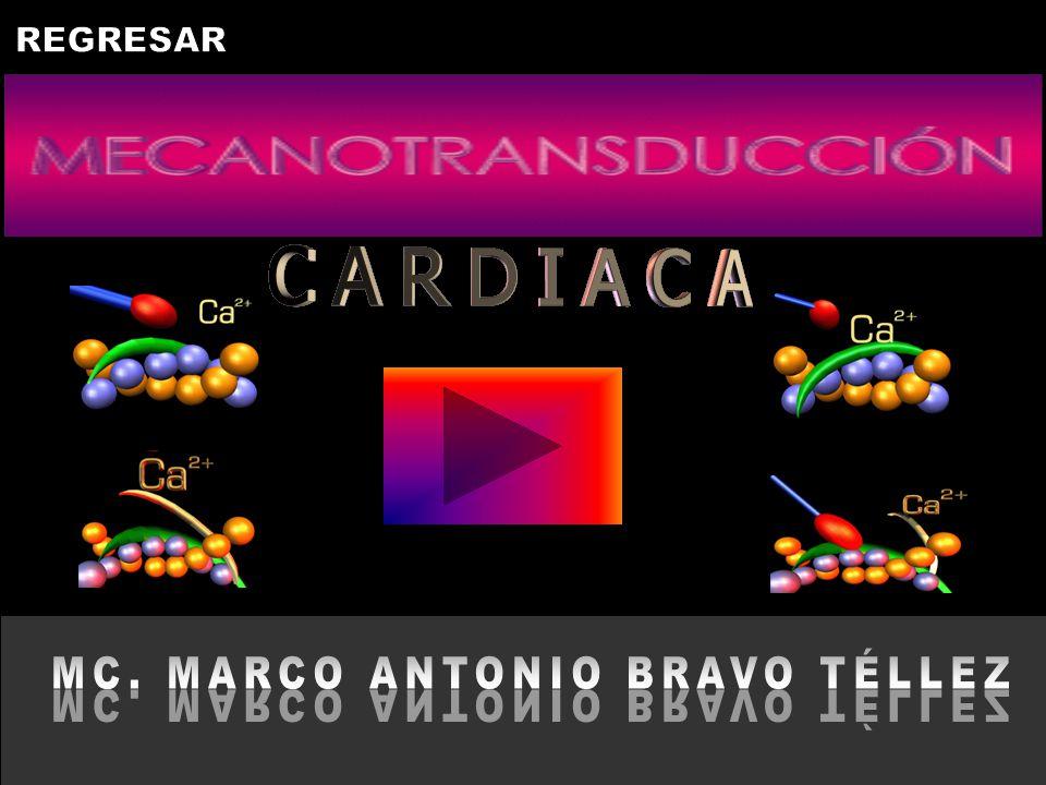 MC. MARCO ANTONIO BRAVO TÉLLEZ