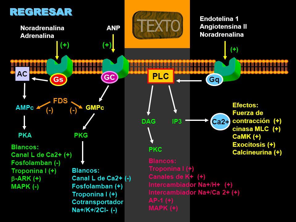 REGRESAR PLC (+) (+) AC GC Gs Gq FDS (-) (-) Ca2+