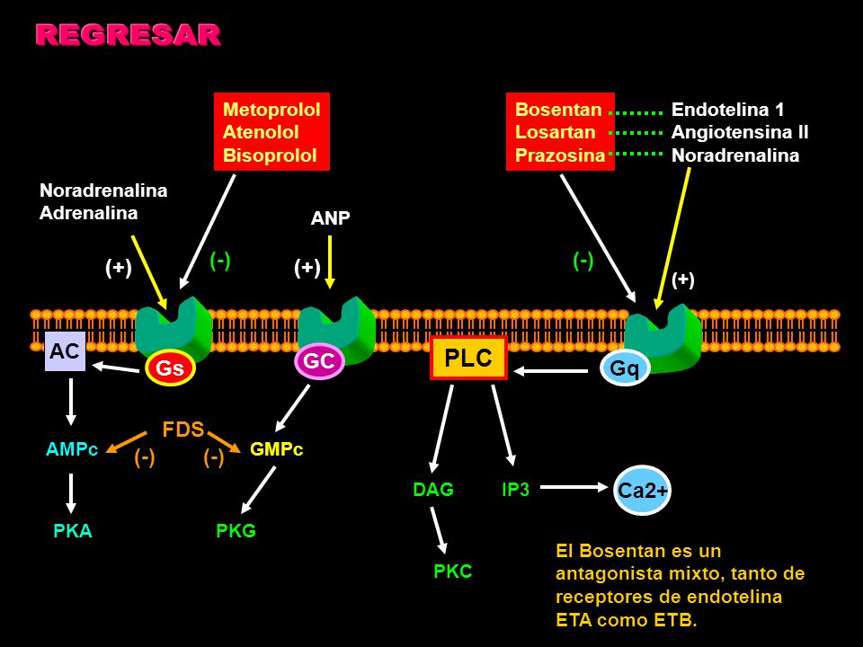 REGRESAR PLC (-) (-) (+) (+) AC GC Gs Gq FDS (-) (-) Ca2+