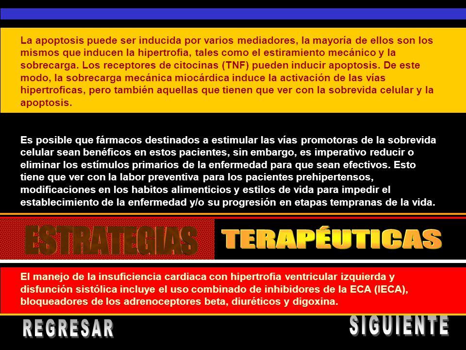 TERAPÉUTICAS SIGUIENTE REGRESAR