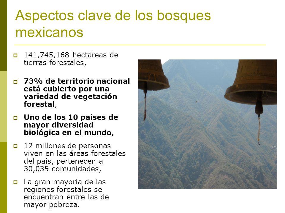 Aspectos clave de los bosques mexicanos