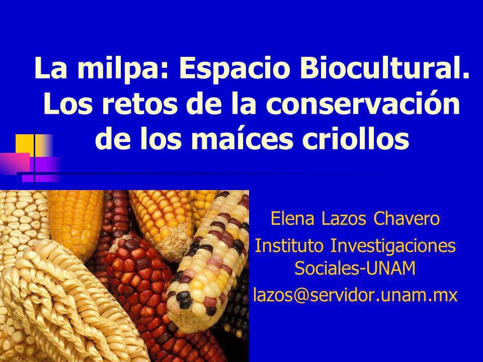 Instituto Investigaciones Sociales-UNAM