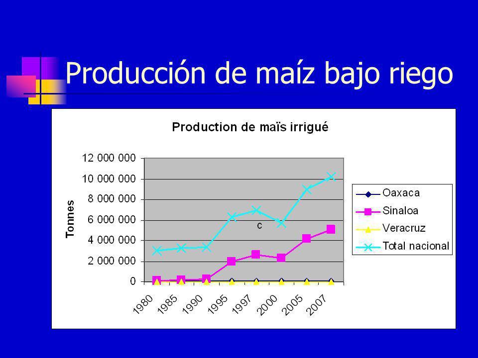 Producción de maíz bajo riego