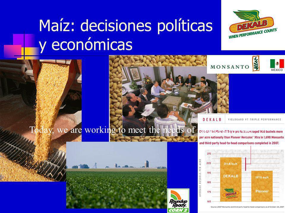 Maíz: decisiones políticas y económicas