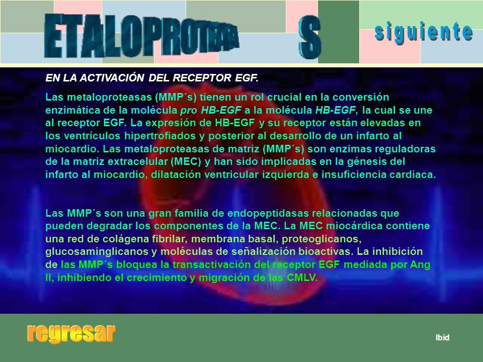 siguiente regresar EN LA ACTIVACIÓN DEL RECEPTOR EGF.