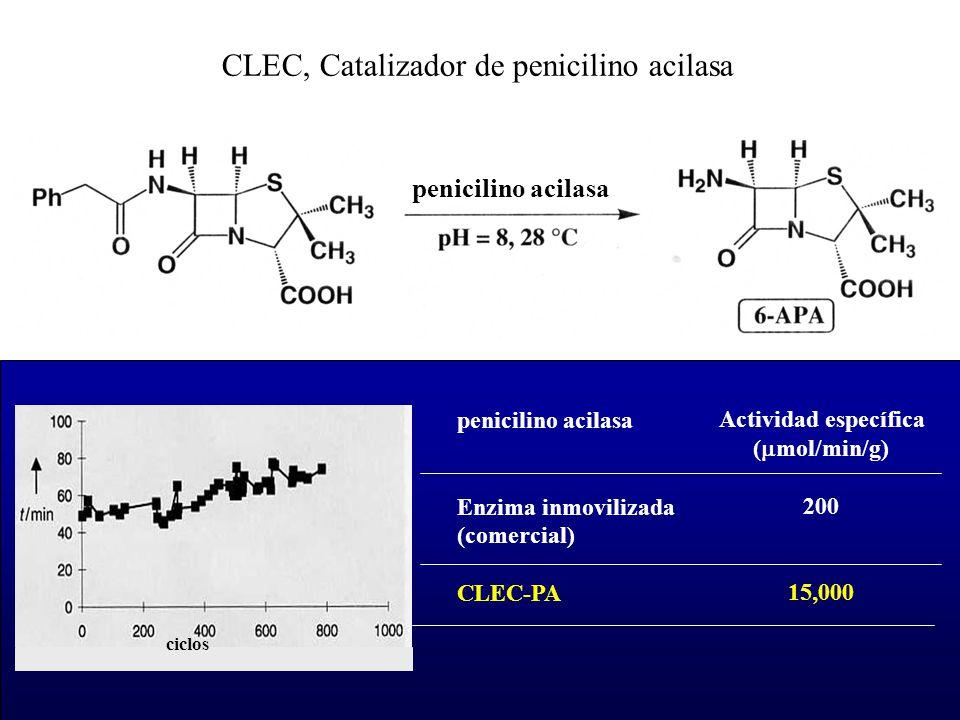 CLEC, Catalizador de penicilino acilasa