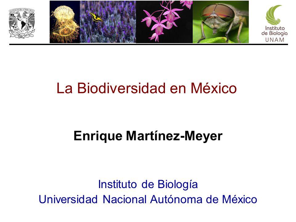 Enrique Martínez-Meyer