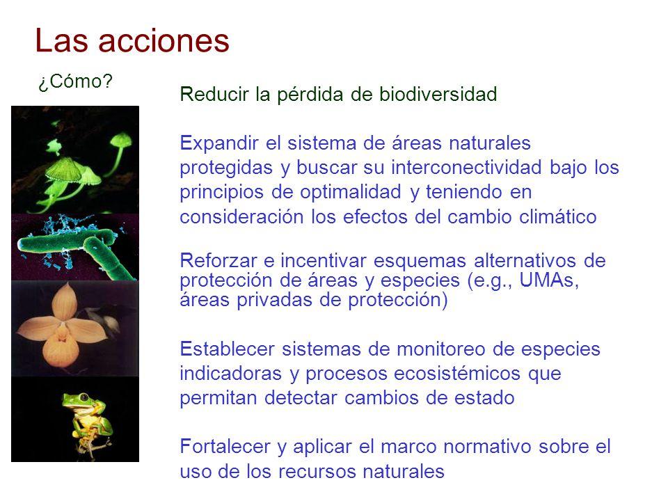 Las acciones Reducir la pérdida de biodiversidad