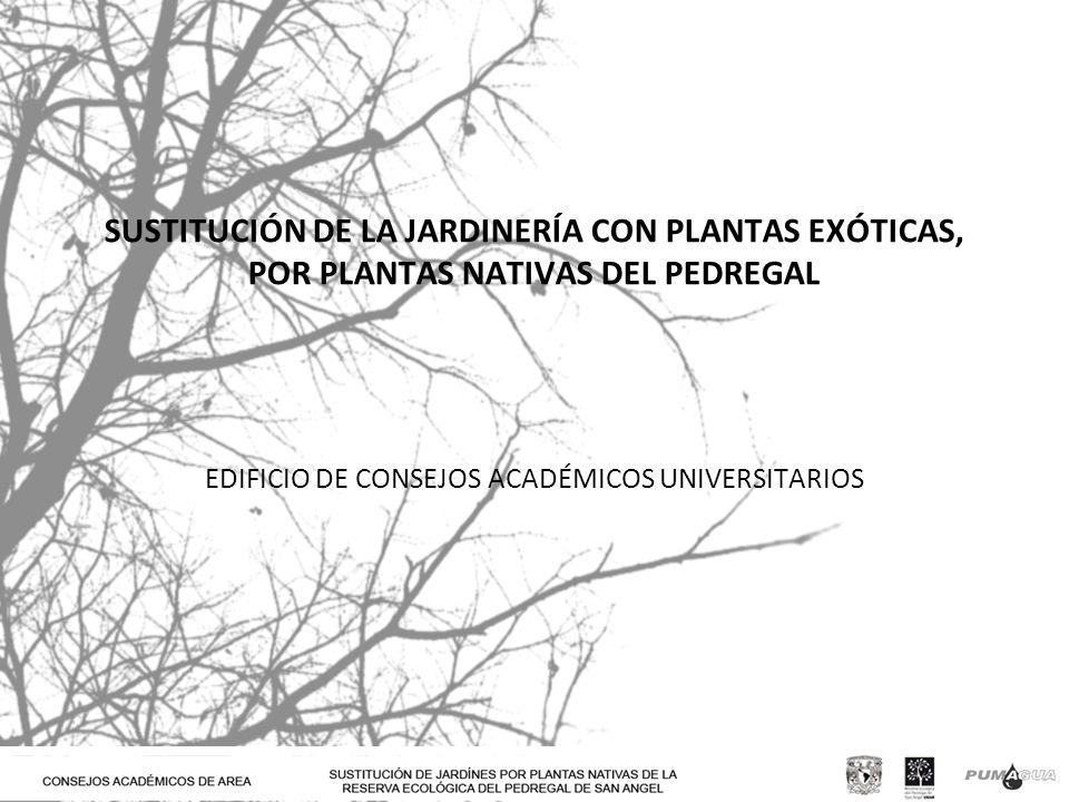 EDIFICIO DE CONSEJOS ACADÉMICOS UNIVERSITARIOS