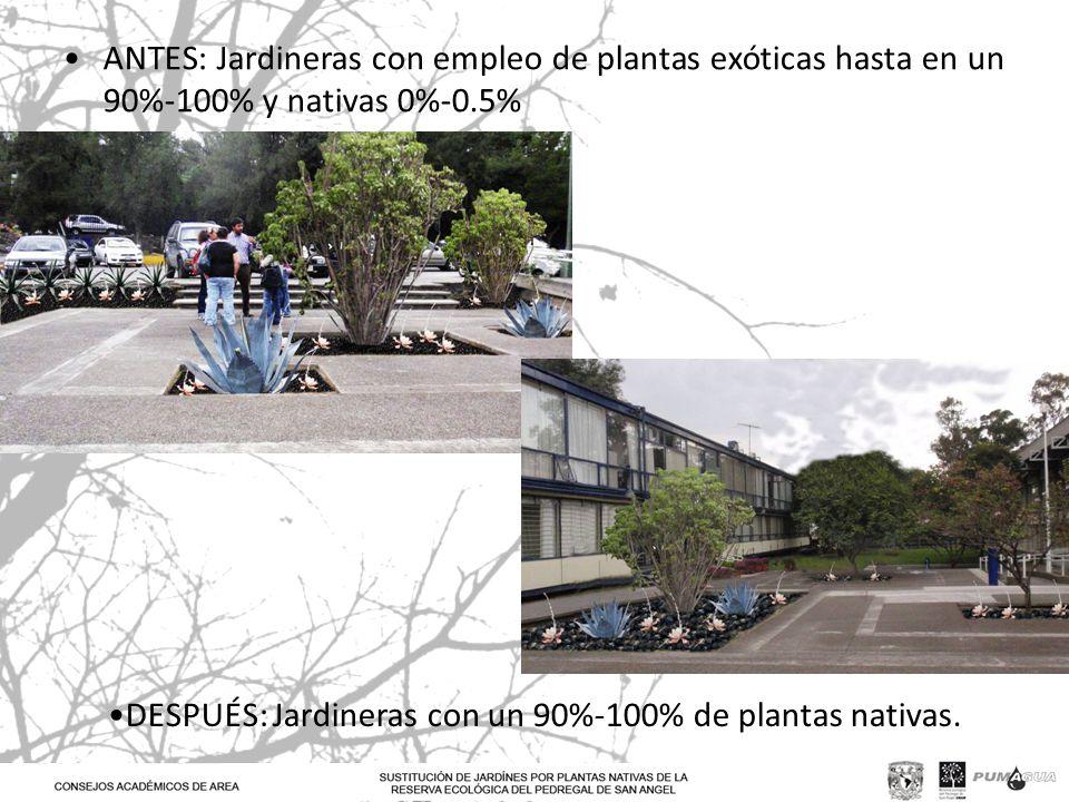 ANTES: Jardineras con empleo de plantas exóticas hasta en un 90%-100% y nativas 0%-0.5%