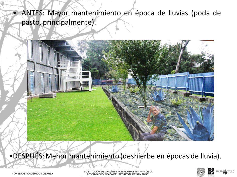 ANTES: Mayor mantenimiento en época de lluvias (poda de pasto, principalmente).