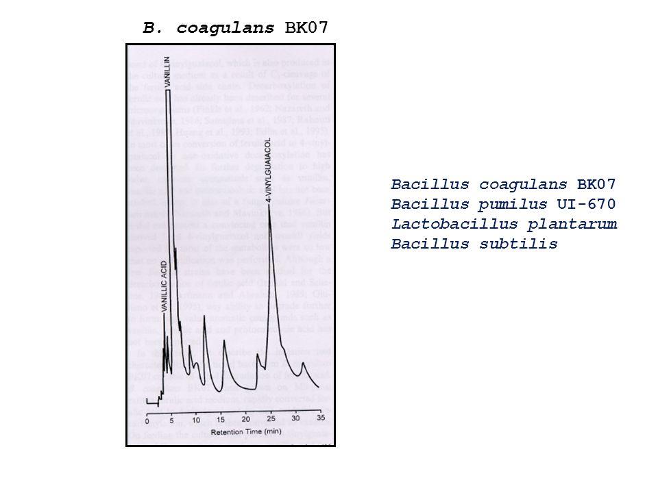 B. coagulans BK07 Bacillus coagulans BK07 Bacillus pumilus UI-670