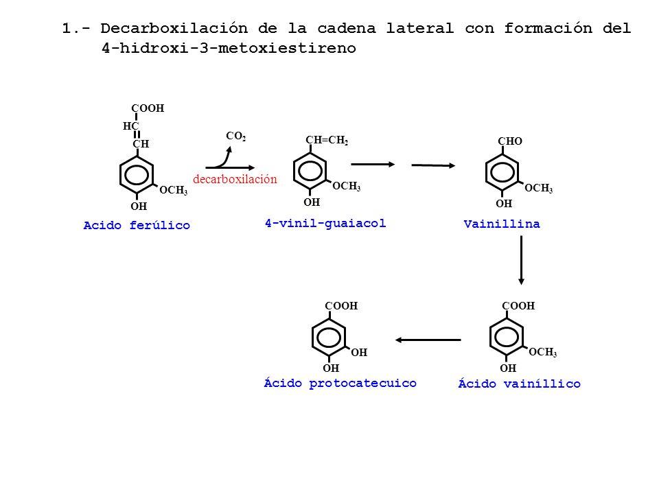 1.- Decarboxilación de la cadena lateral con formación del
