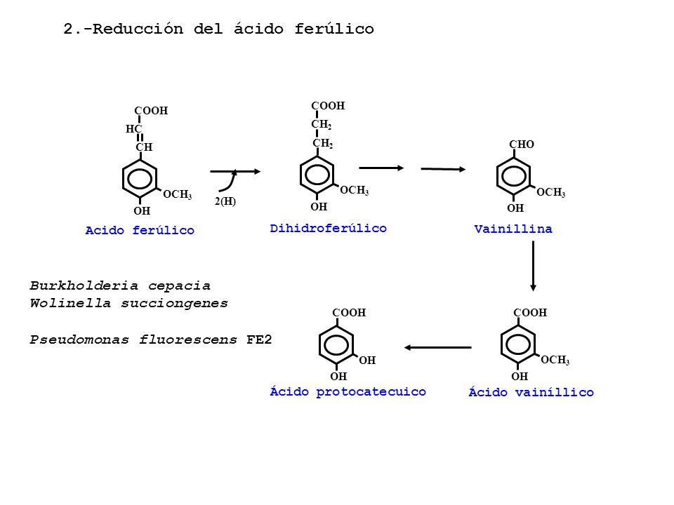 2.-Reducción del ácido ferúlico