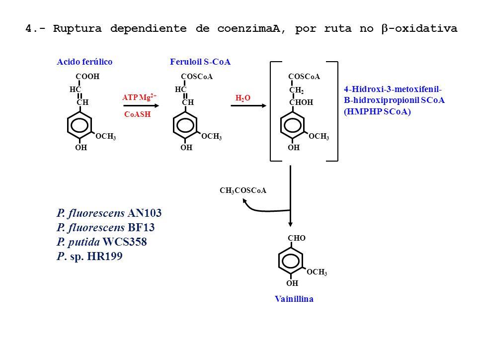 4.- Ruptura dependiente de coenzimaA, por ruta no b-oxidativa